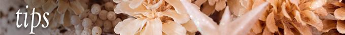 爪の豆知識